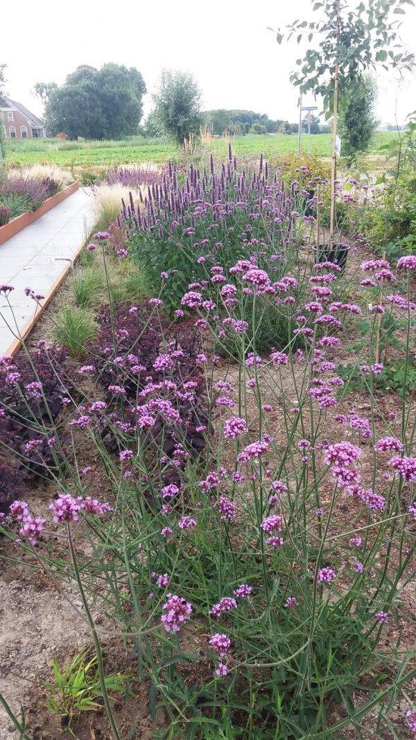 Beplantings-plan-Tuin-Uithuizen