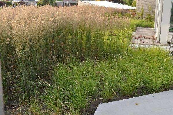 Beplantings-plan-tuin-Harkstede